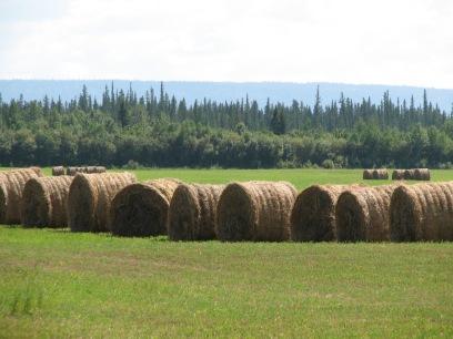 Bales in Bluehills Tompkins Landing