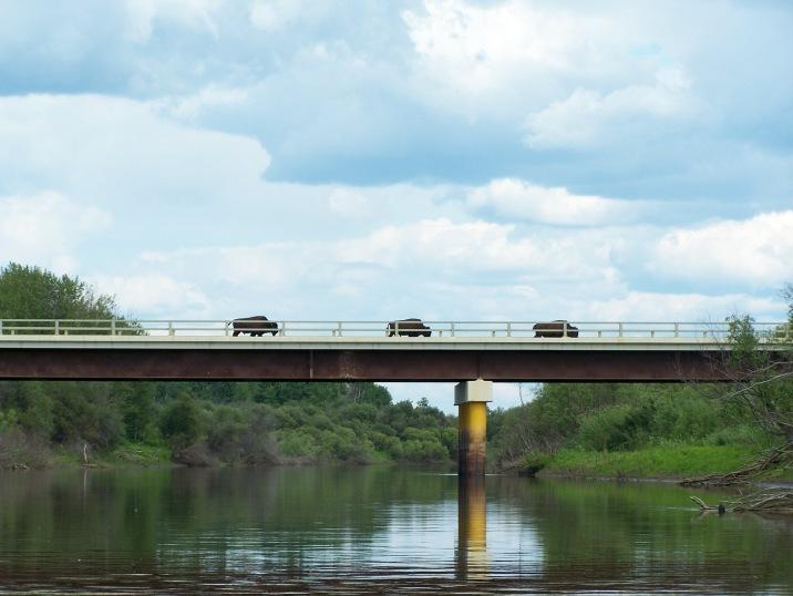 buffalo on bridge